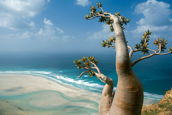 Socotra-Island-in-Yemen_Great-scenery_1575