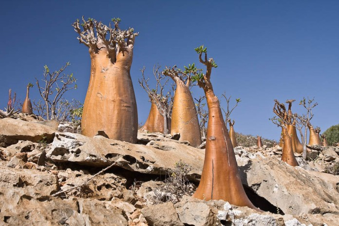 Socotra-Island-in-Yemen_Great-setting_5656