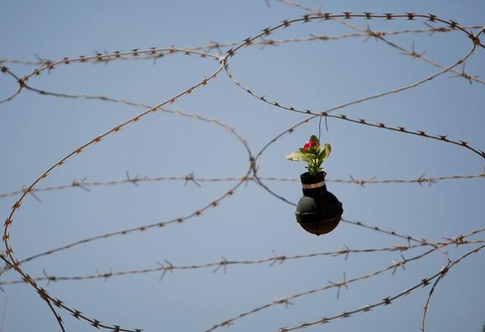 Flower on razor wire