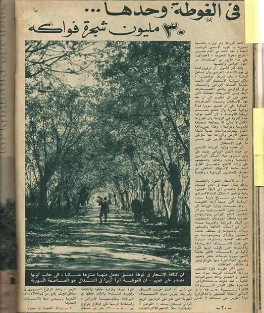 1958 thrity million fruti trees