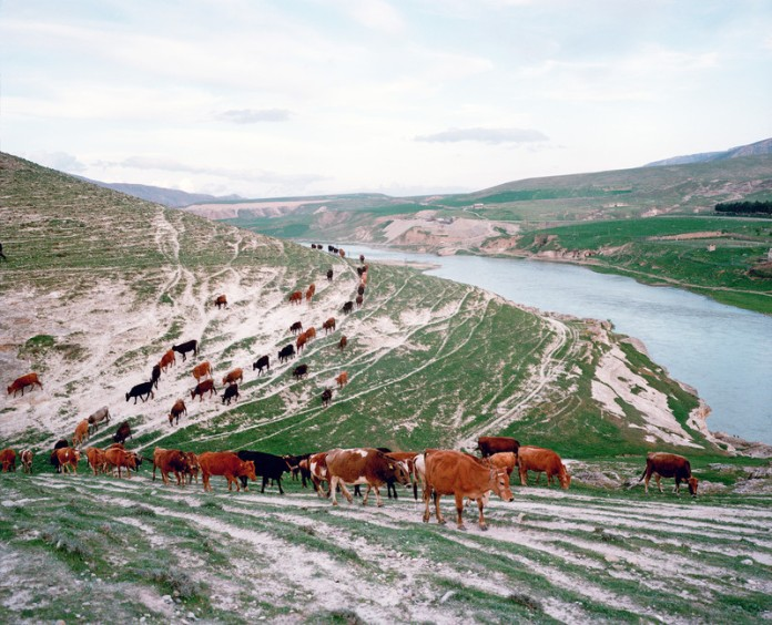 A herd of cattle are walking back towards the village by the banks of the Tigris river. The river is predominant in the life of the inhabitants of the region of Hasankeyf. The Ilisu Dam project due in 2015 will flood 80% of the ancient monuments of Hasankeyf along with 52 other villages and 15 small towns by the year 2016 destroying a unique historical site where a mix of Assyrians, Roman and Ottoman monuments belong. The Turkish government maintains contrariwise that it will bring means in the poor region to develop its economy, notably by allowing the creation of 10,000 jobs, the development of an activity of peach and the irrigation of the agrarian lands. Kesmeköprü, Turkey